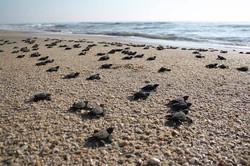 costa-rica-turtles.jpg