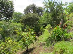 Walking trail, Hermosa Costa Rica
