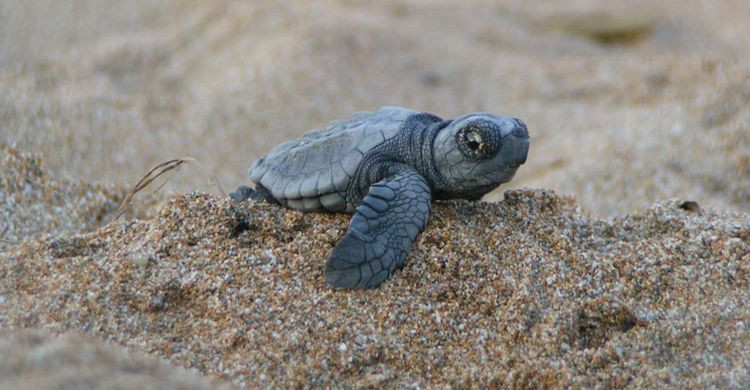 turtle_day_loggerhead_costa_rica.jpg