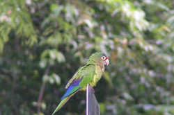 952 Tarcoles Costa Rica 195.jpg