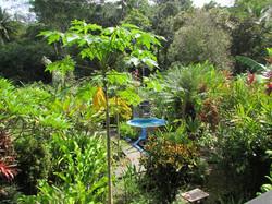 945 Dominical Ocean View088.JPG