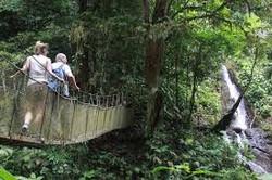 Rainmaker suspension bridges