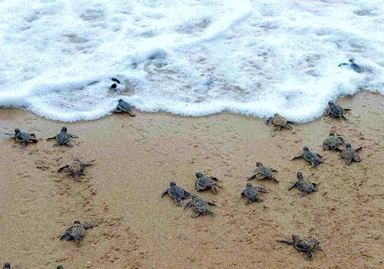 sea-turtles-costa-rica