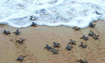 sea-turtles-costa-rica.jpg