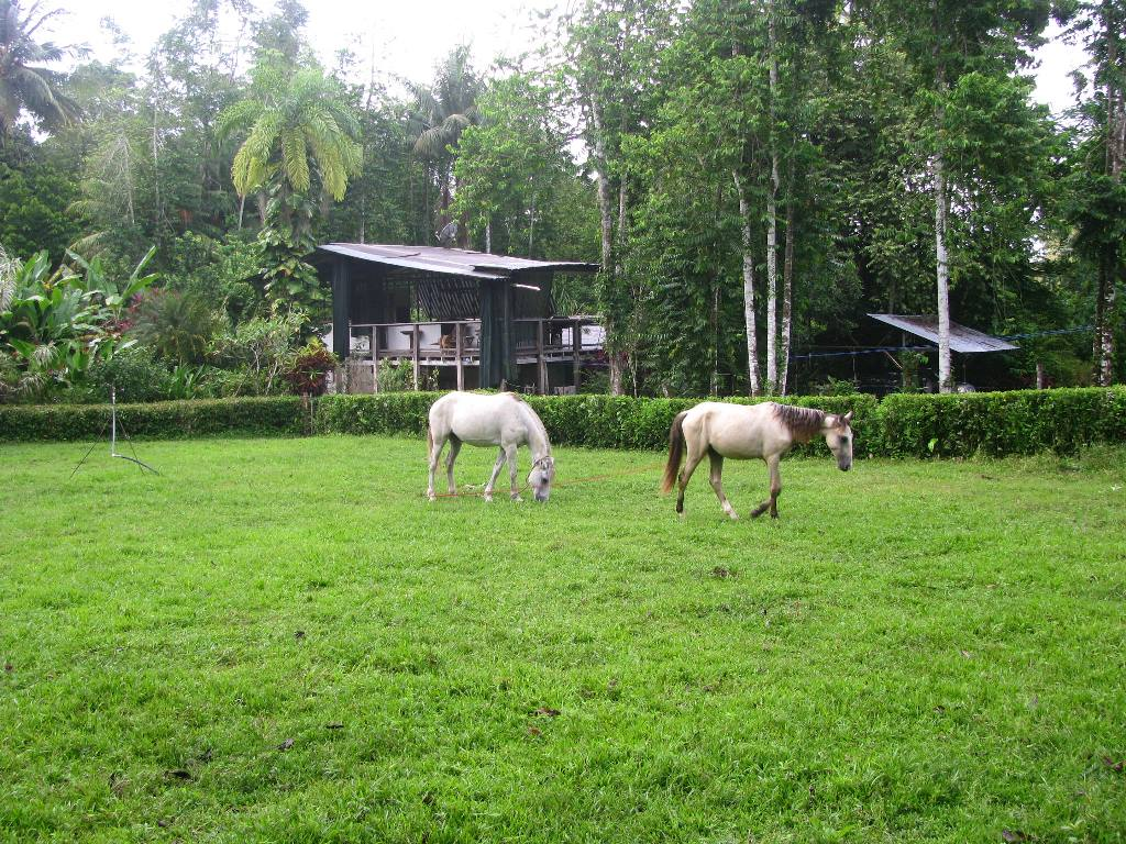 horses R.JPG