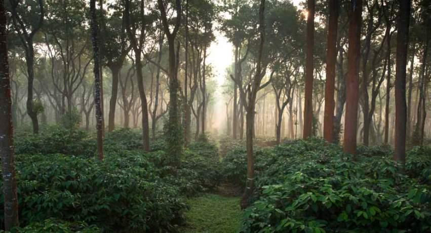 cloudforest851x460.jpg