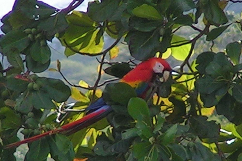 952 Tarcoles Costa Rica 194.jpg