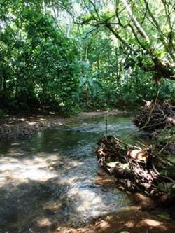 creek bordering property.jpg