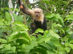 monkey back yard.JPG