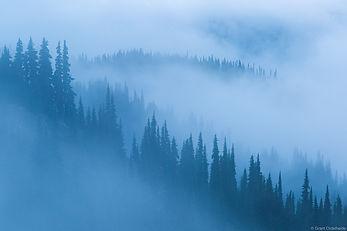 Ordelheide_20160719-_D5A0071_foggytrees.