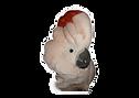 Moluccan cockatoo clipart.png