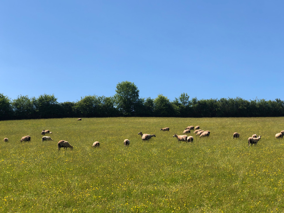 Lambing at Three Pools