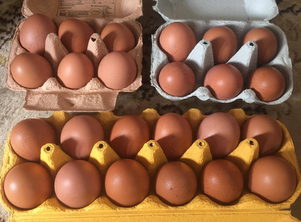 Chickens: Hatching, Rescue, Eggs