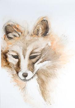 fox on terraskin.jpg