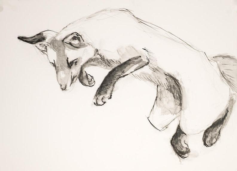small fox terraskin.jpg