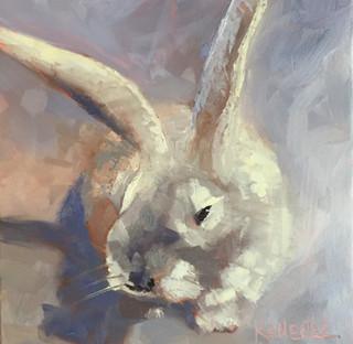 Gray, Tall-Eared Rabbit
