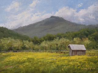 Buttercup Season at The Farm