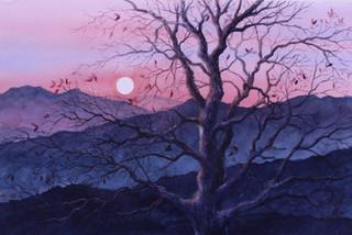 Sunset Through the Tree