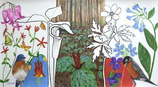 Geranium Jack Spring