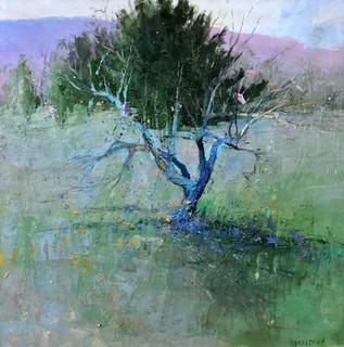 Andrew Braitman -The Last Tree - Toni's Tree