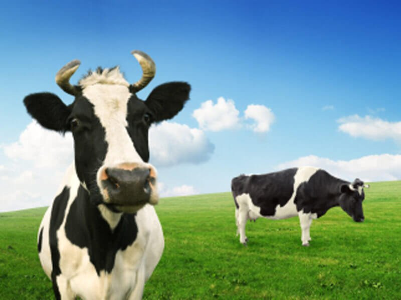 The TCOW: Mooing Towards Improvement