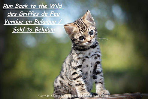 run back to the wild belgique 2.jpeg