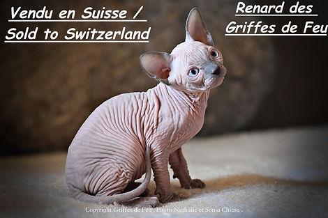 renard suisse.jpeg