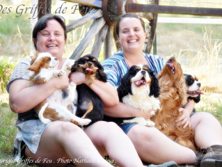 Shooting photos : nos mâles Cavalier King Charles en vedette