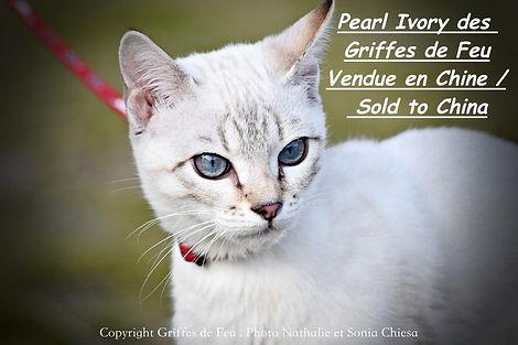pearl ivory chine.jpeg