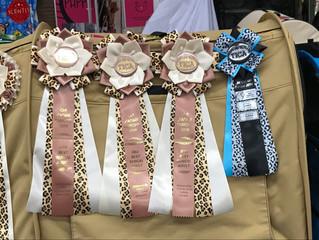 Outankhamon des Griffes de Feu est 3e meilleur Bengal adulte , meilleur cuir de nez et meilleur vent