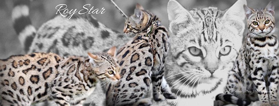 ROY STAR.jpeg