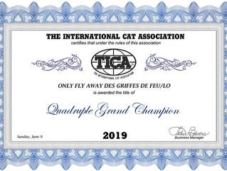 Only fly away des Griffes de Feu devient Quadruple Grand Champion TICA en Juillet 2019 !