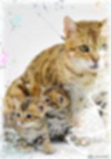 photoeffets.com_-8.jpeg