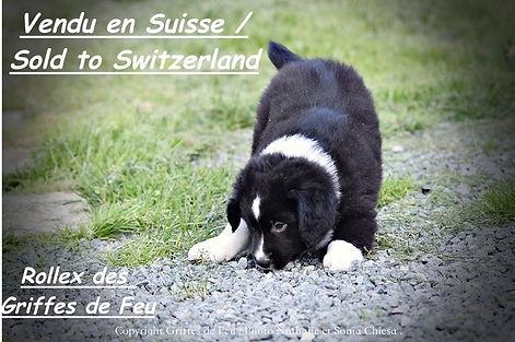 rollex suisse.jpeg