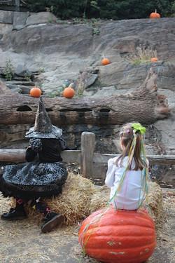 Pumpkin watching at the NYBG