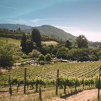 clientes viñas vino terrenal