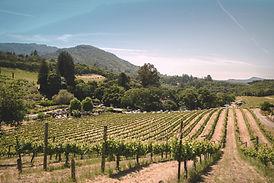 paysage vignes provence vignoble