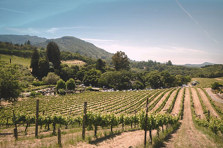 Vineyard. Explore Bay area as a part of your gcb11 experience