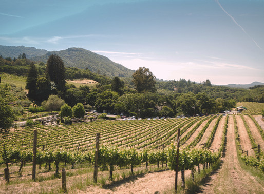 California Wine Country Gets Help from a France Native