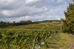 wineyardszone.JPG