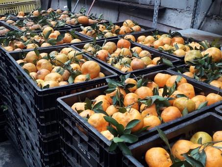 Diadema realiza Semana Municipal da Alimentação