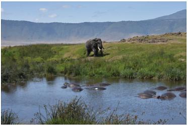 Elephant - Tanzania.PNG