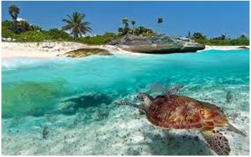 Zanzibar turtle.PNG