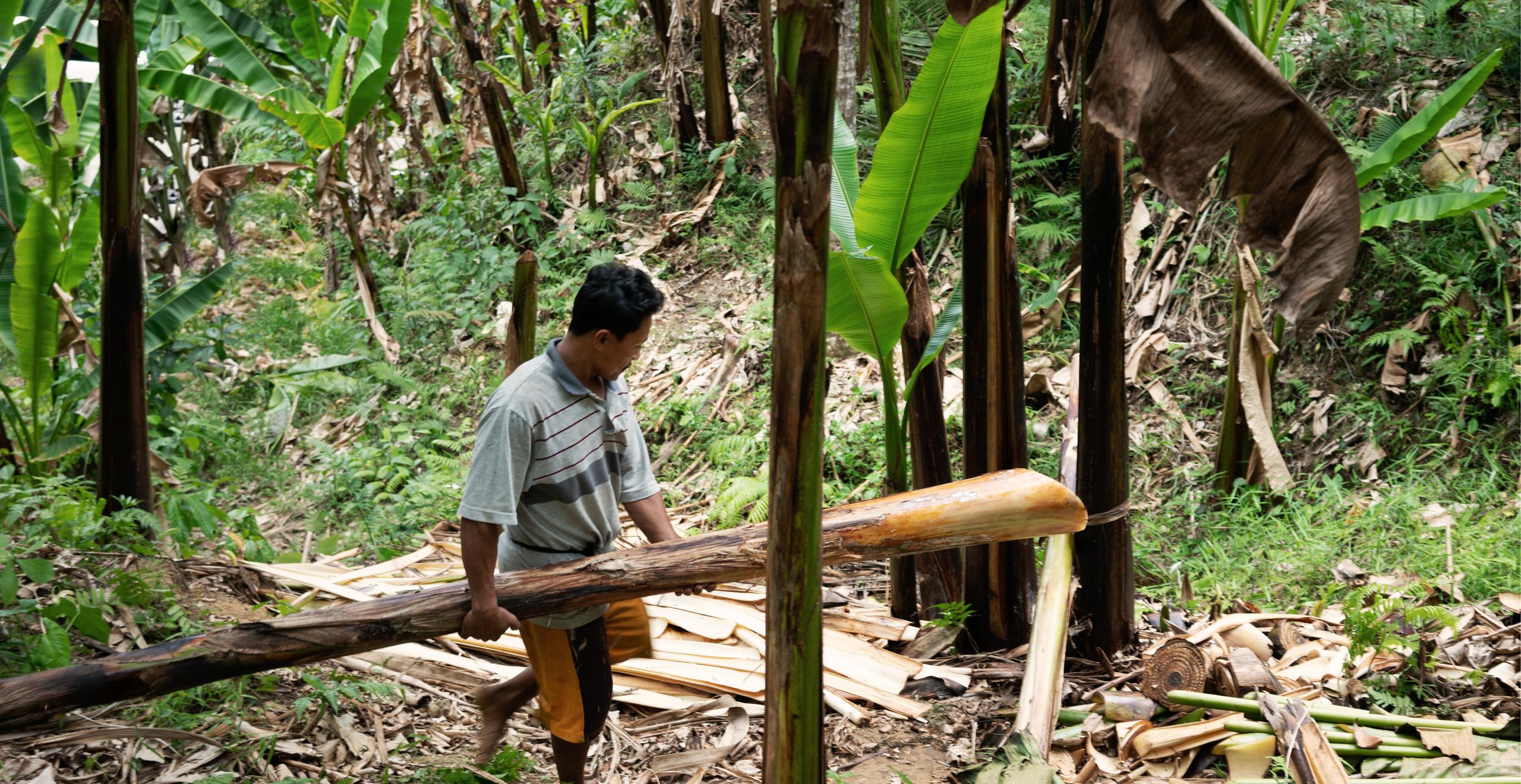 Die Fasern stammen aus dem Hauptstrunk der Bananenstauden. Copyright: Qwstion