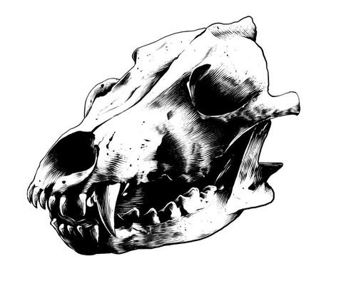 Illustration: Wolfsschaedel