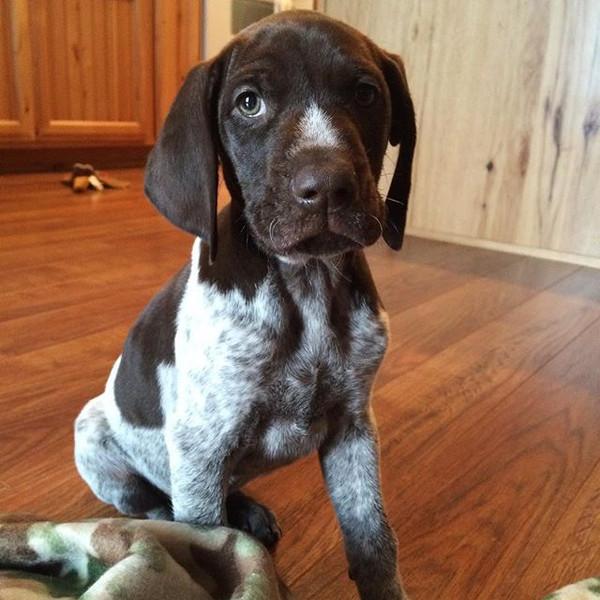 Clancy was such a cute puppy