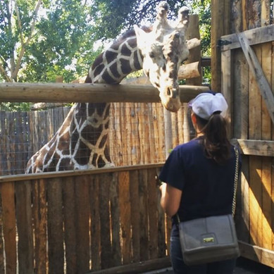 Lindsey feeding a giraffe at the zoo
