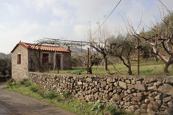 Holiday house in Eressos Lesvos estate with olive trees and beautiful mountain