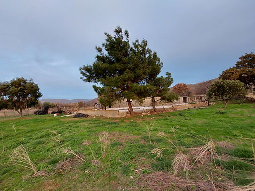For sale a plot of 4000sqm with excellent views of the sea of Eressos