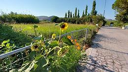 Land for sale in Skala Eressos